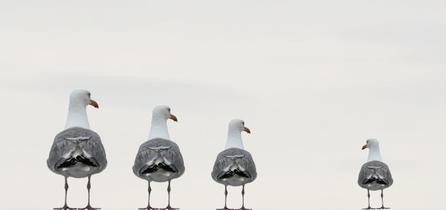 gulls-2662550_1920 (1)